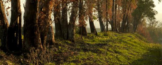 Diffondi energia positiva con l'eucalipto