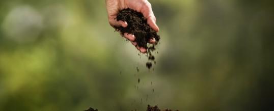 Elemento Terra : una tecnica efficace per il benessere della milza