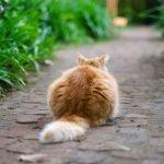 fiori-di-bach-gatto-spaventato