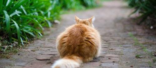 I fiori di bach e il gatto spaventato – La Ruota di Medicina