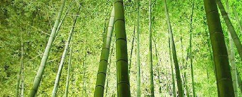 Elemento legno: la personalità in Medicina Cinese