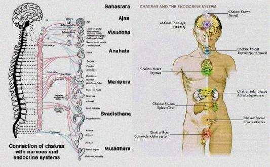 Corsi di Pranic Healing scopri l'allineamento pranico-4