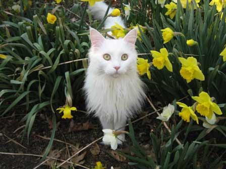 I fiori di bach e il gatto spaventato - La Ruota di Medicina